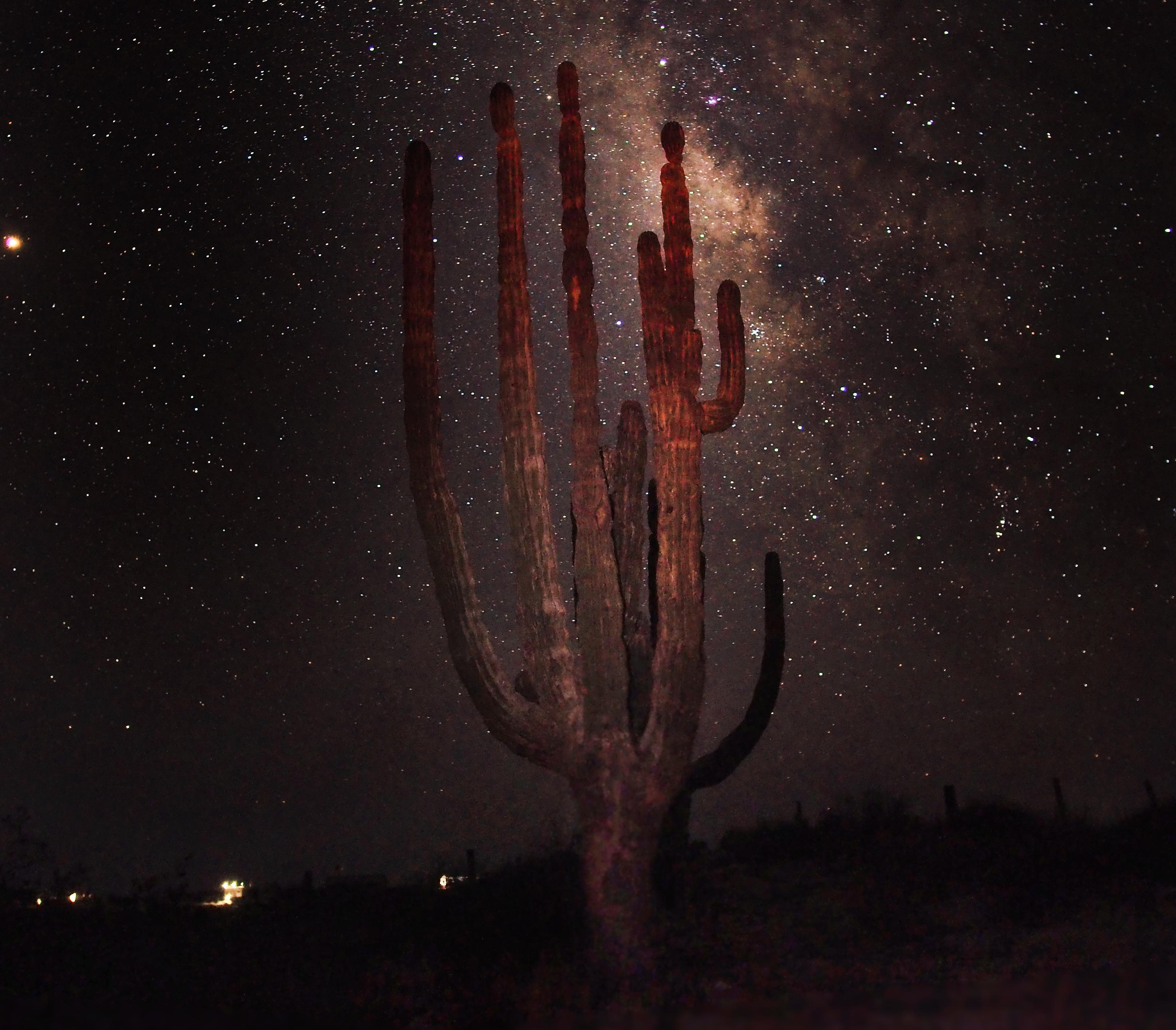 giant cactus at night