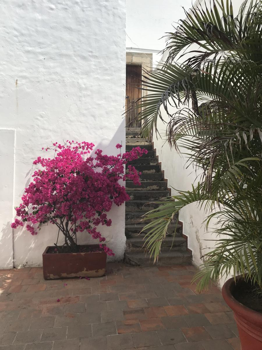 flowering bougainvillea outside the entrance of a building
