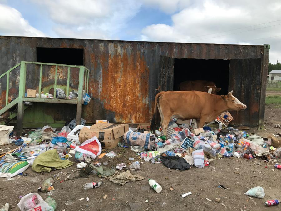 A cow amongst piles of strewn piles of items to be recycled