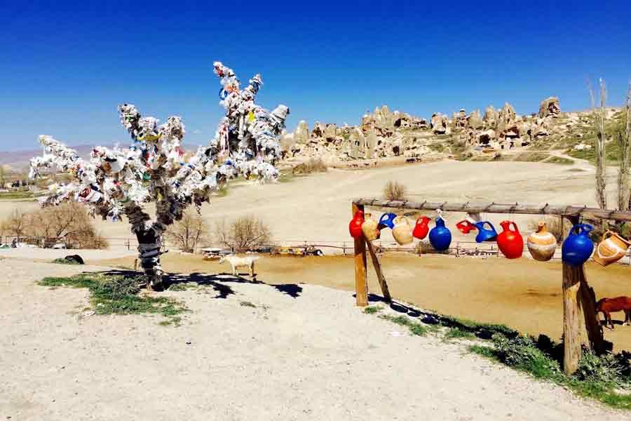A tree with wishes tied to it, against a desert background
