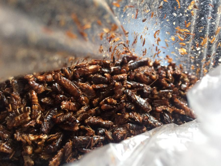 fried termites