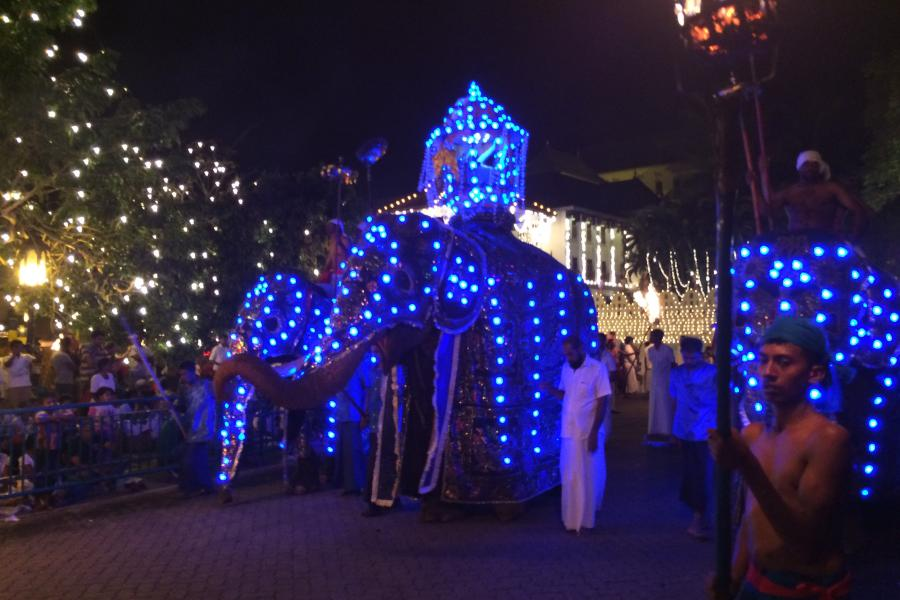 Parading elephants wearing garments with blue-lights